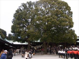 20140211_明治神宮_建国記念日15_320.JPG