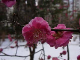 20140211_靖国神社20_320.JPG