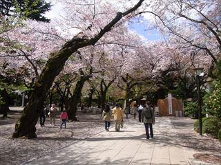 20140405_靖国神社と桜11_320.JPG