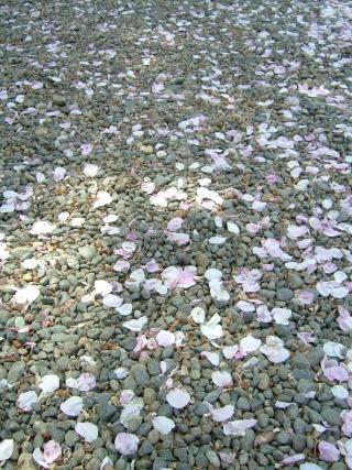 20090411_靖国神社05.jpg