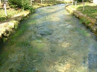 20091012_乃木神社05.jpg