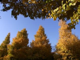 20091206_01靖国神社.jpg