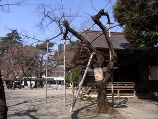 20140308_靖国神社15_320.JPG