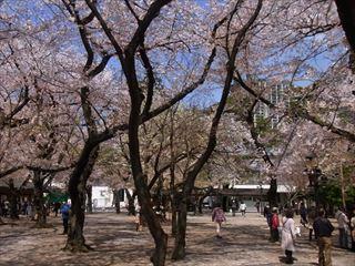 20140405_靖国神社と桜06_320.JPG