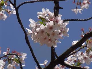 20140405_靖国神社と桜09_320.JPG