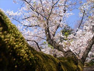 20140405_靖国神社と桜10_320.JPG